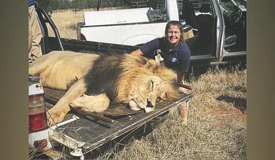 Fury as lions who mauled keeper set to face 'death sentence'