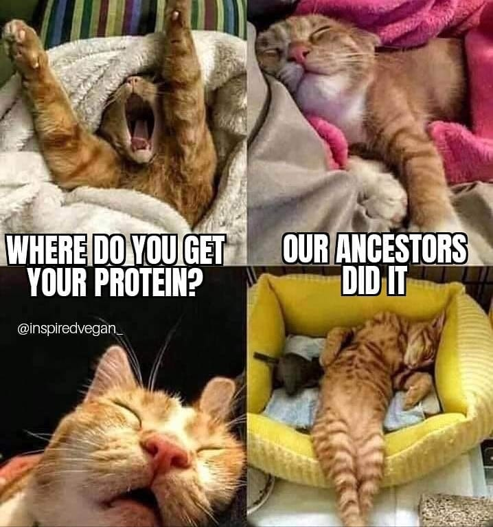 Our ancestors did