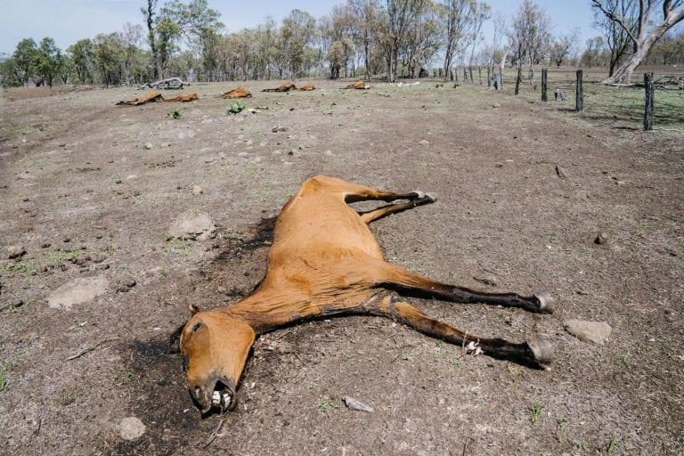 Outrage as 8 starving horses found amid 'slowly decomposing' corpses at farm