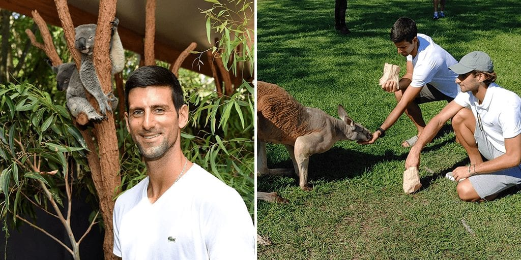 Vegan athlete Novak Djokovic can't stand animals being slaughtered for food