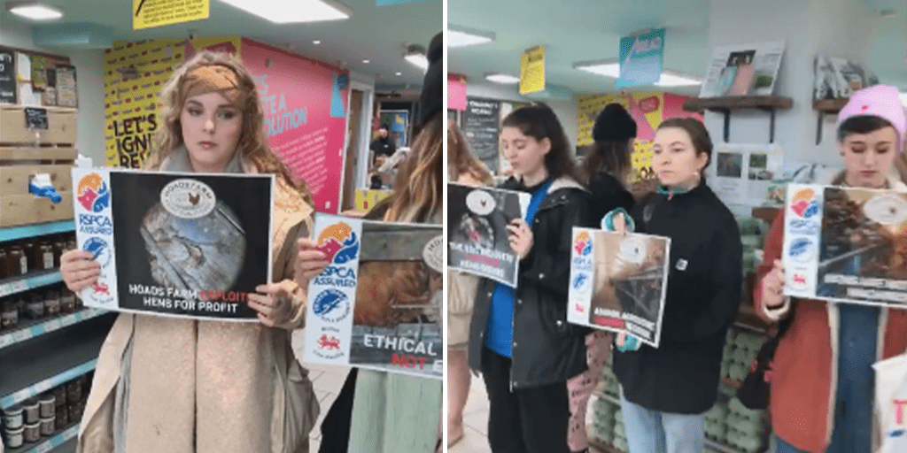 Vegan protesters target free range egg aisle at Sainsbury's and Aldi following harrowing investigation at 'ethical' farm