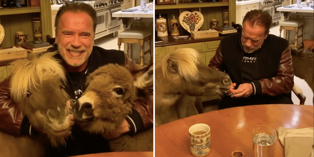 Arnold Schwarzenegger and mini ponies urge seniors to stay inside