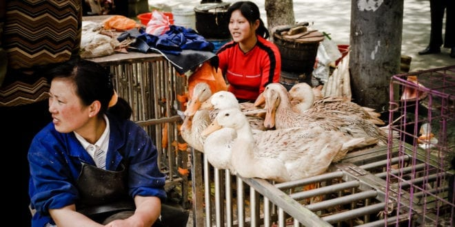 China finally implements a permanent ban on wildlife meat to stop virus spread
