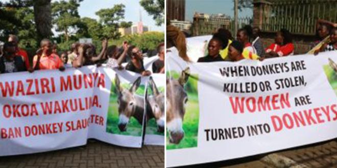 Commercial slaughter of donkeys banned in Kenya