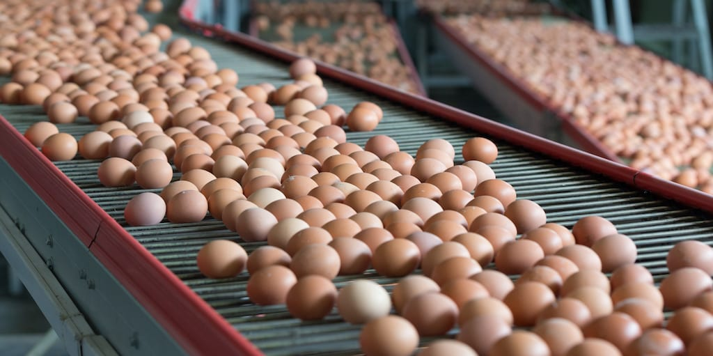 Hens at major egg farms to live cage-free by 2025 in Arizona