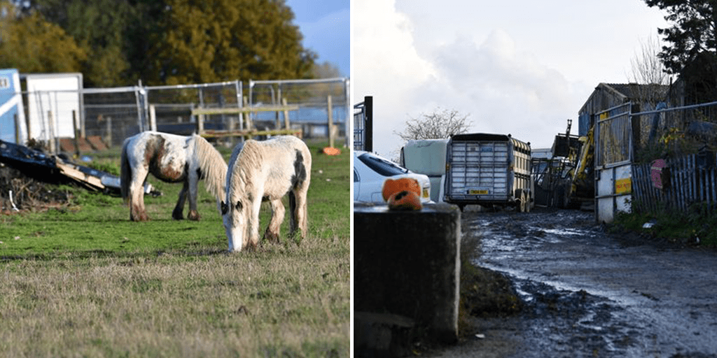 Investigators find horse carcass in plastic bag and hoof in a bucket in puppy farm raid