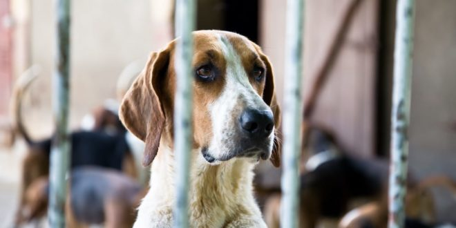 Pet abuser protection act is passed in Alabama