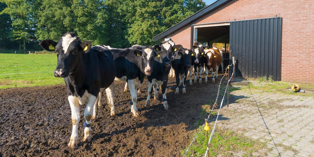 USDA reports more than 3200 dairy farms shuttered in 2019