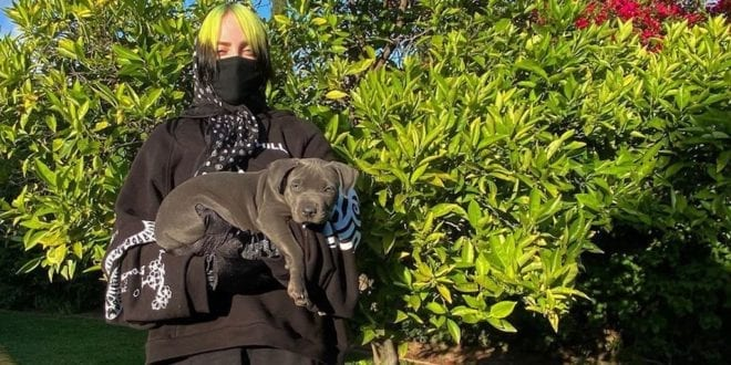 Billie Eilish adopts her adorable quarantine foster puppy companion