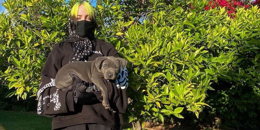 Billie Eilish adopts her adorable quarantine foster puppy companion