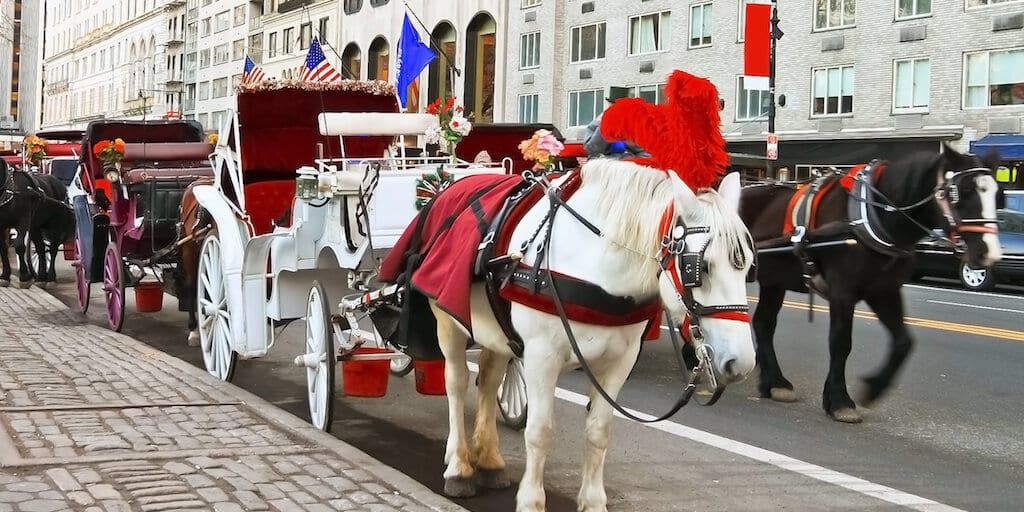Chicago city council bans horse-drawn carriages starting in 2021