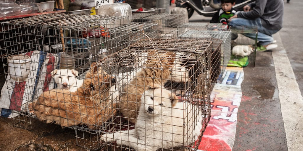 China may soon ban dog meat trade
