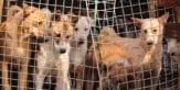 China may soon ban dog trade