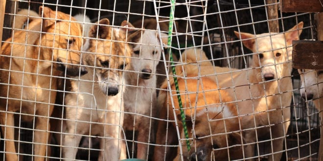 China may soon ban dog trade