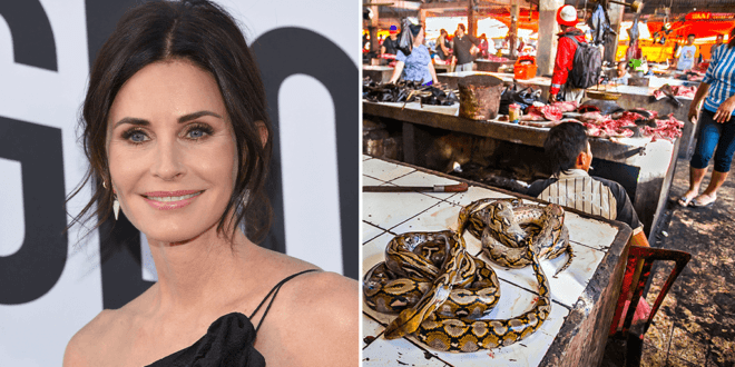Courteney Cox says illegal wildlife trade is to blame for coronavirus spread