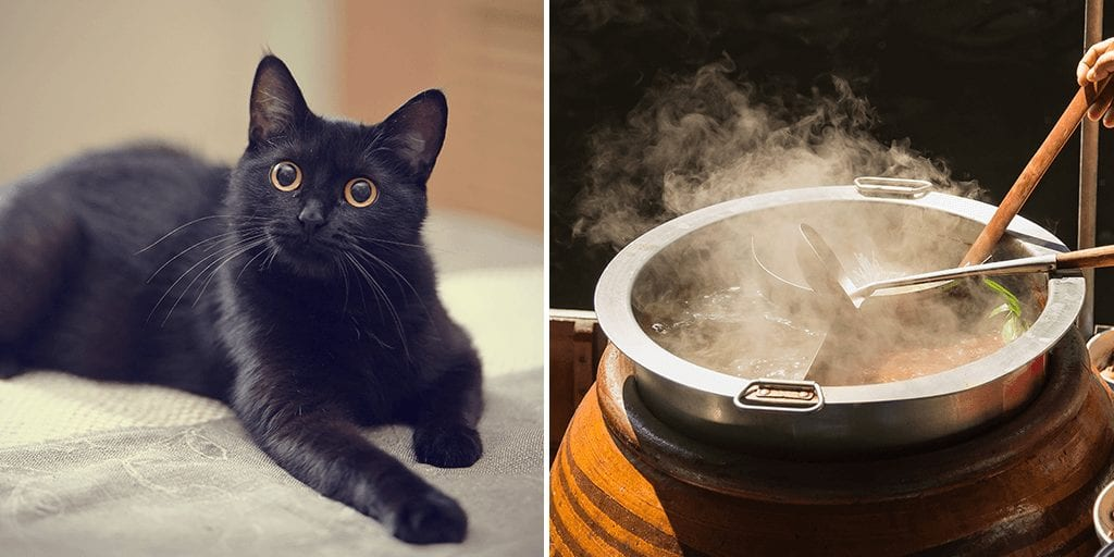 Graphic footage show black cats being boiled and ground into paste to make COVID-19 remedy