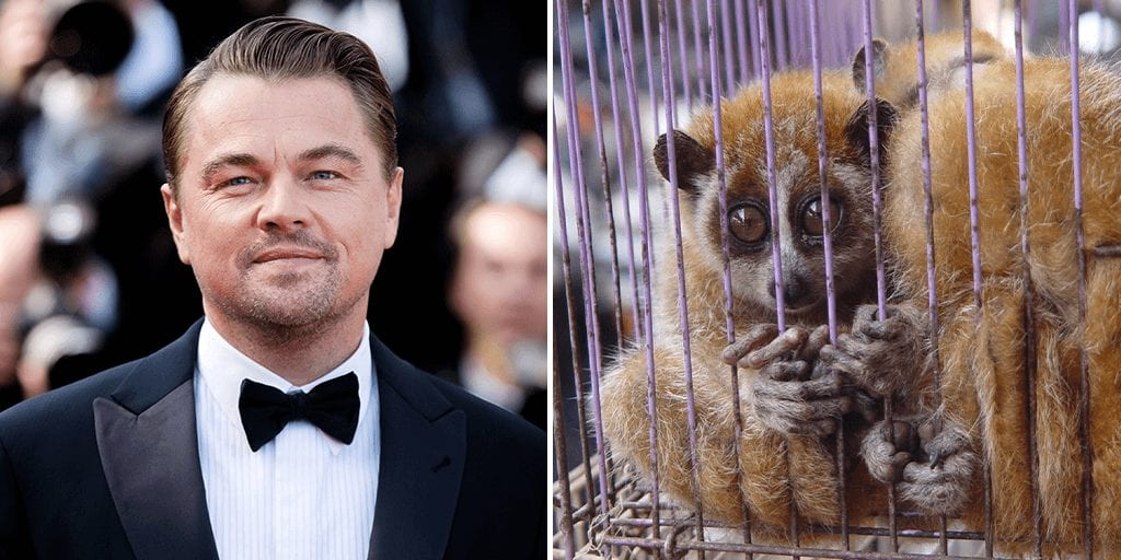 Leonardo DiCaprio says it is 'most important' to end wildlife trade now