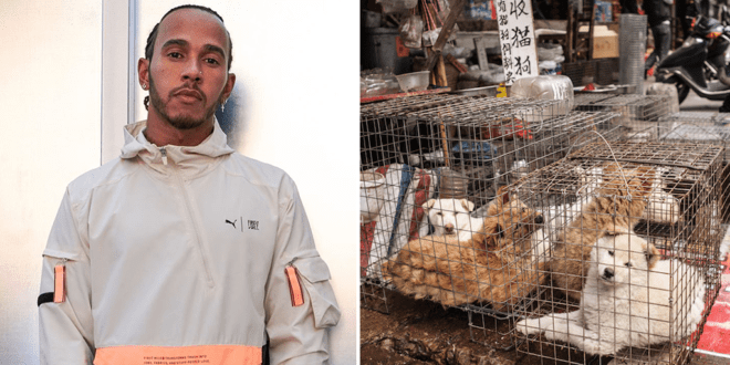 Lewis Hamilton wants fans help China end dog meat trade