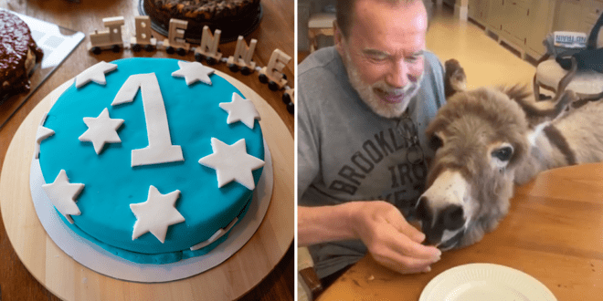Arnold Schwarzenegger's cute lockdown birthday party for his donkey
