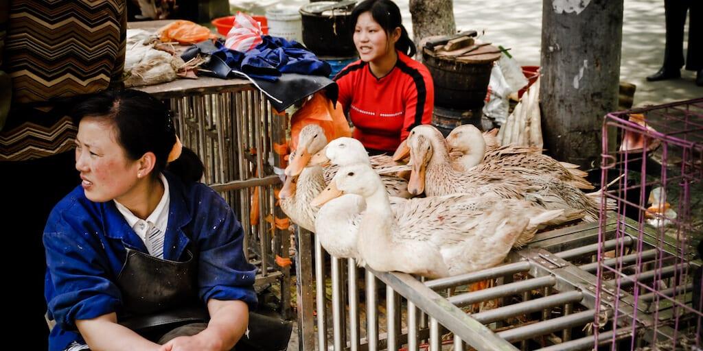 Disease breeding, filthy wet markets continue to sell reptiles, bats, and birds despite coronavirus