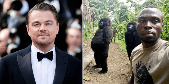 Leonardo DiCaprio launches $2 million fund to protect Africa's heritage gorilla park