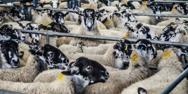 NY lawmakers' new bill to ban disease-spreading live animal markets