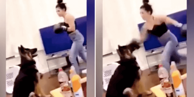 woman BOXING her German Shepherd