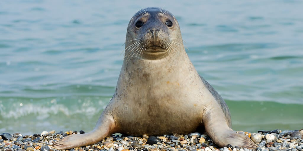 Scottish officials just bans fish farms from shooting seals