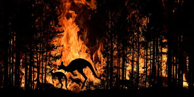 3 billion animals killed or harmed by Australia's 'worst wildfires'