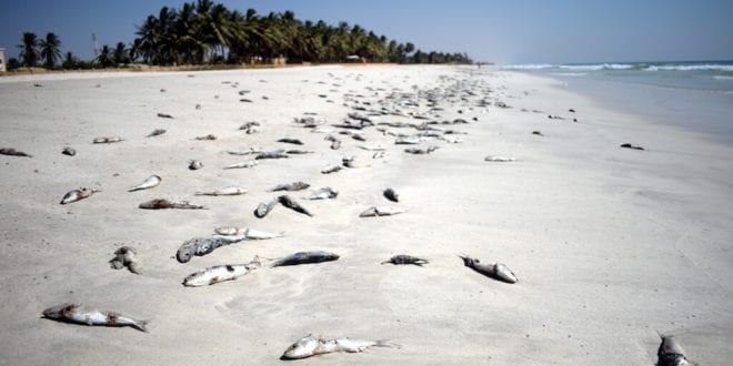 60% of fish species may succumb to rising ocean temperatures 2100