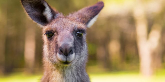 Nike, Dick's Sporting Goods, and other retailers caught selling banned kangaroo skins in California
