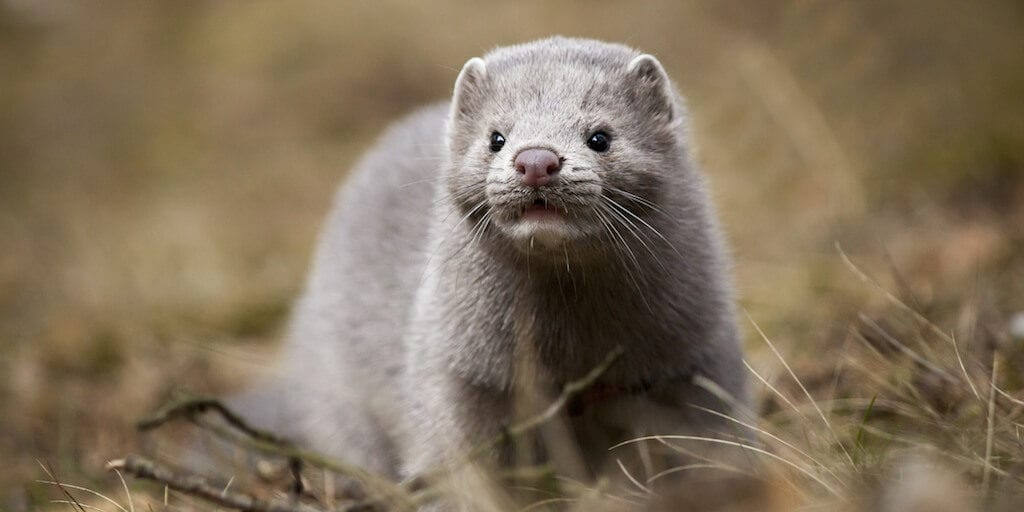 Velour just banned mink fur false eyelashes