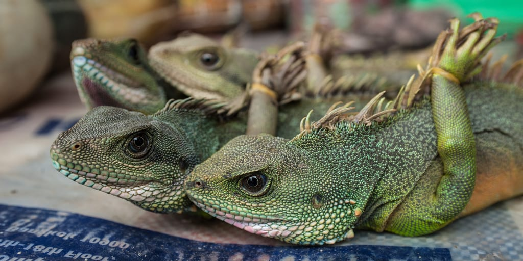 Vietnam bans wild animal imports and markets in COVID-19 crackdown