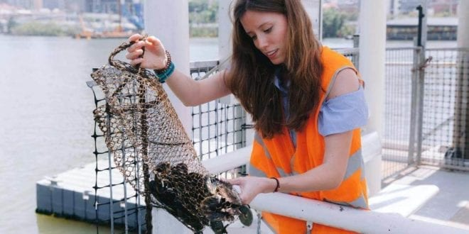 Australian study finds plastic in 100% of seafood samples