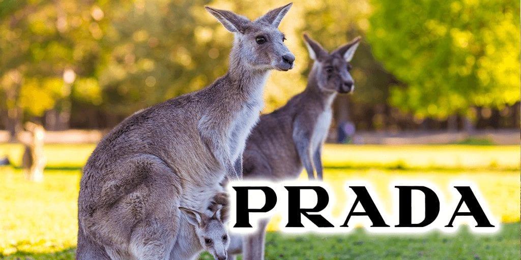 Italian fashion group Prada just banned Kangaroo leather