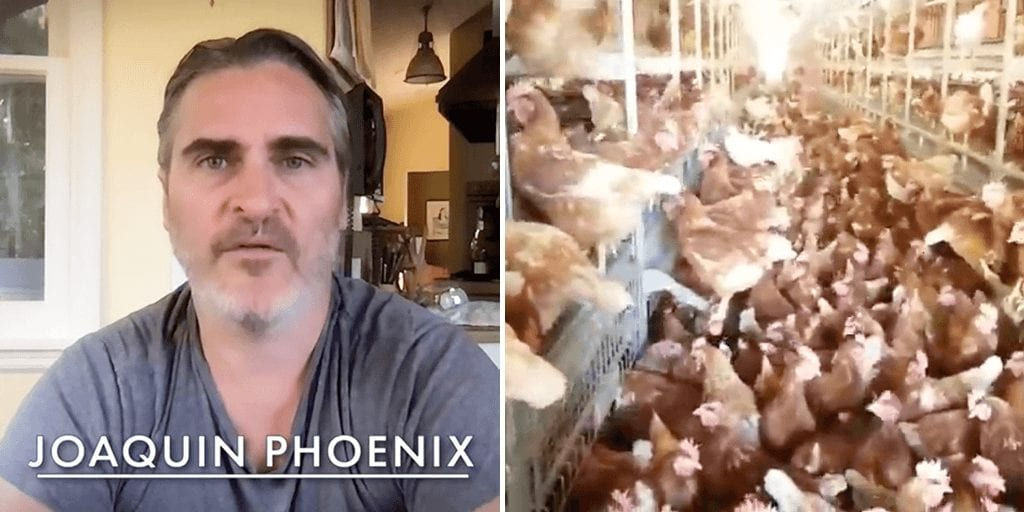 Joaquin Phoenix calls on people to 'reject animal cruelty' and 'change the world from your kitchen'
