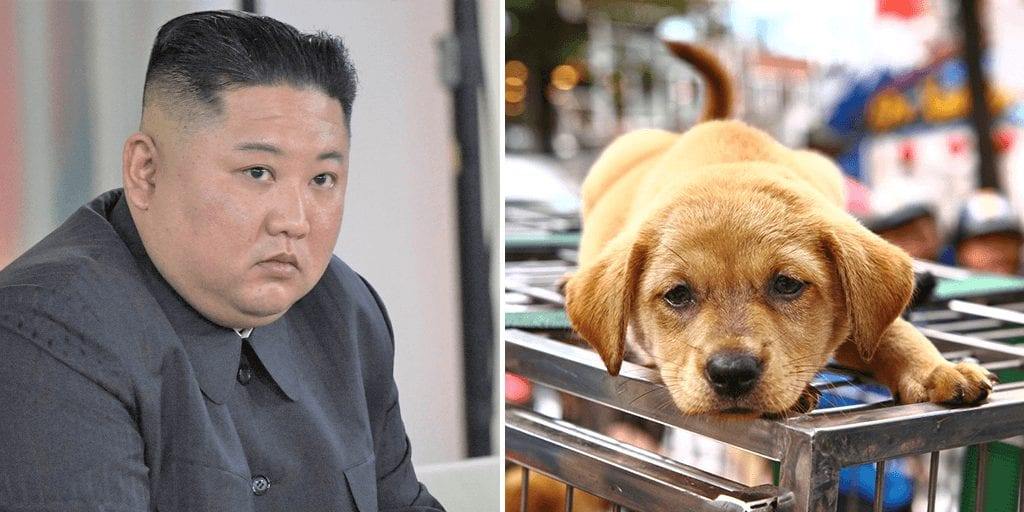 North Koreans ordered to sacrifice pet dogs to resolve national food shortages