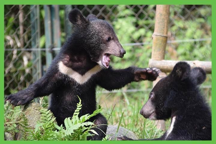 demand end to bear bile farming
