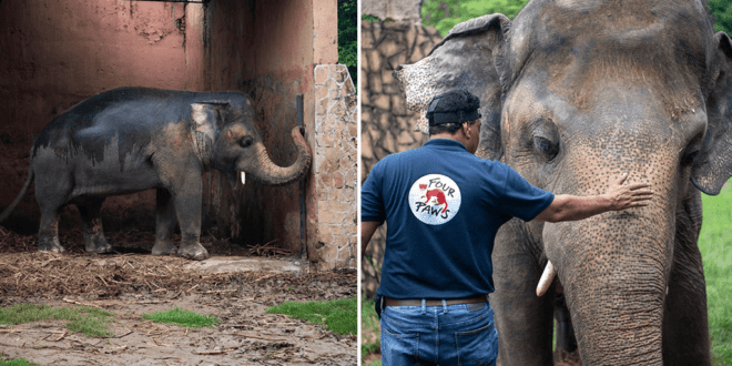 'World's loneliest elephant' to finally leave Pakistani zoo for new life