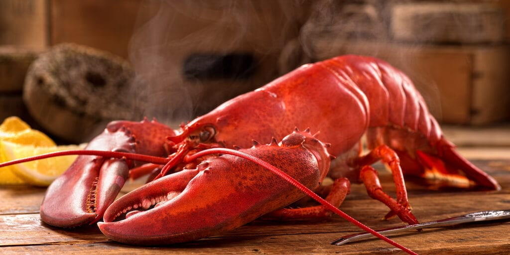 British vets want a ban on boiling lobsters alive