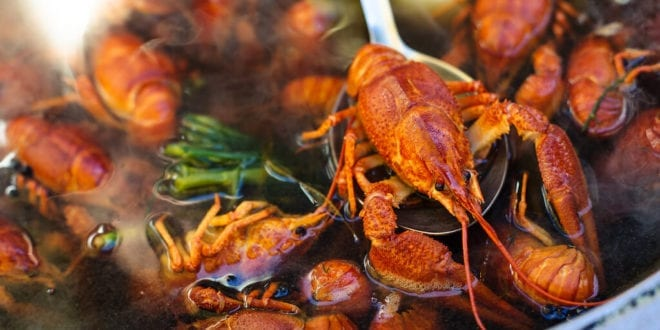 British vets want a ban on boiling lobsters