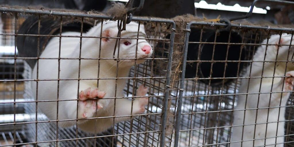 Polish parliament votes in favour of fur farming ban