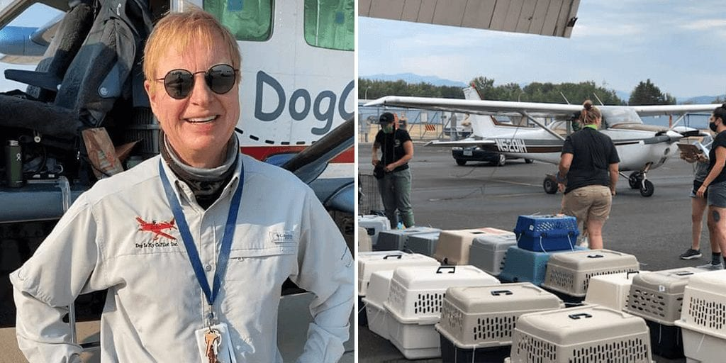 This former doctor saves thousands of dogs and cats by flying them to no-kill shelters
