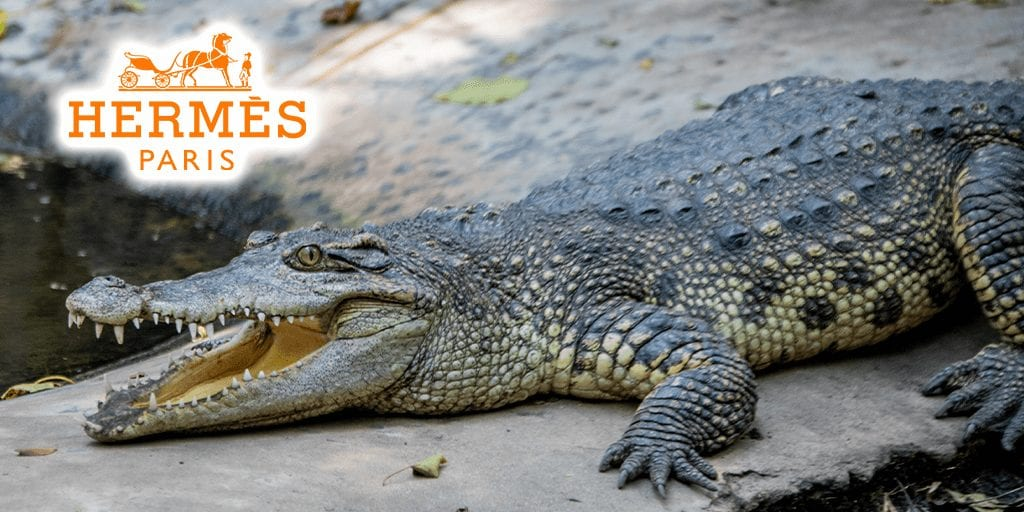 Hermès slammed over proposed NT crocodile farm imprisoning 50,000 animals for skin and meat