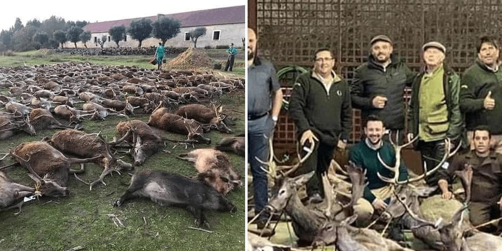 Spanish hunters kill 540 wild animals in 'vile and unacceptable' expedition