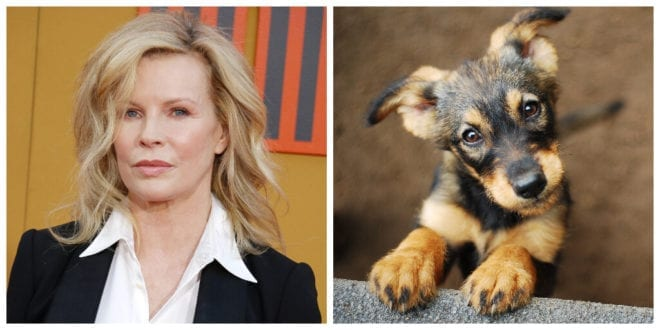 Kim Basinger urges Craigslist to end all animal abuse on its platform