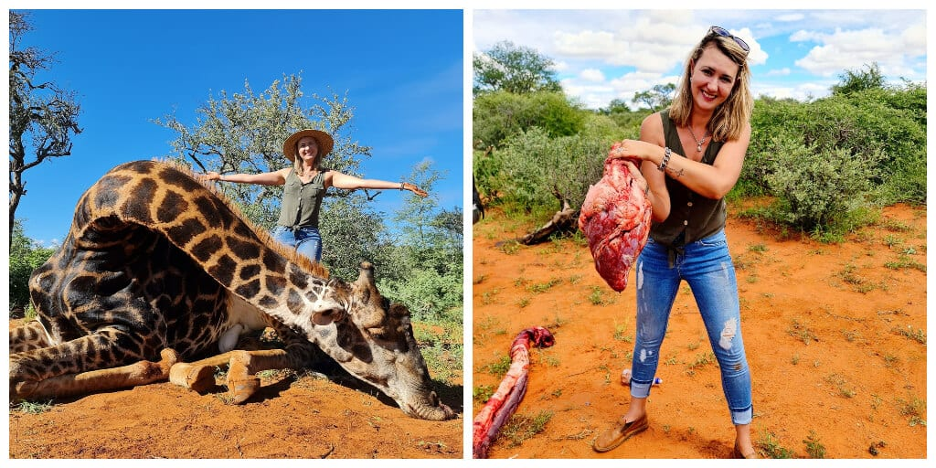 Trophy hunter kills rare giraffe and cuts out its heart as a valentine's present