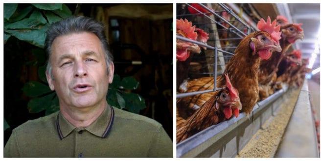 Chris Packham calls on UK supermarkets to stop selling cruel 'Franken-chickens'