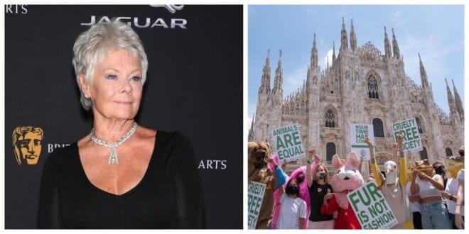 Dame Judi Dench, Nathalie Emmanuel, and more celebs join Stella McCartney's anti-fur campaign